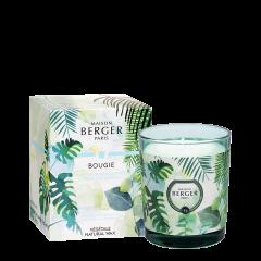 Bougie Parfumée Immersion - Fraîcheur d'Eucalyptus